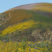 Carrizo Plain National Monument Wildflowers April 12, 2017