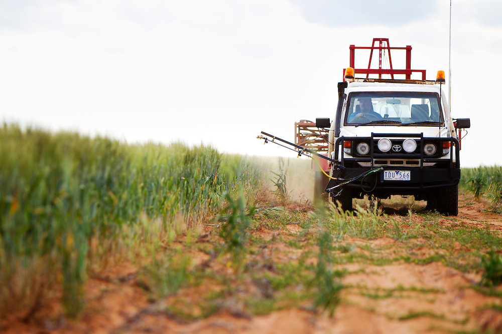 A ute with a spray rig used to spray insecticides on Australian Plague Locusts is towed through at risk wheat crops by farmer Brent Morrish in Ouyen, Victoria, Australia.   The Victorian government has pledged $43.5million in support to help combat what could be the worst locust plague in over 75 years in South Eastern Australia with potential imapcts on agriculture of over $2 billion.