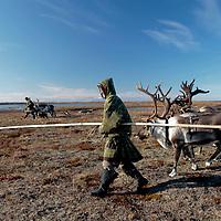 Sept 2009 Yamal Peninsula, Siberia, Russia - global warming impacts story on the Nenet people , reindeer herders in the Yamal Peninsula Andrei Ysengi