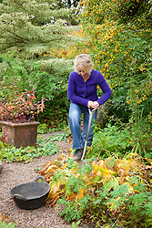 Dividing a hosta. Carol Klein digging out a slice with a spade
