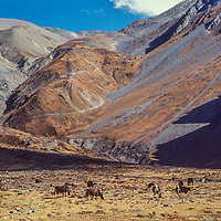 Muktinath Valley, Nepal.