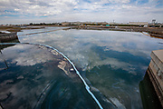 An oil slick in the Talbert Marsh near Huntington State Beach. An estimated 127,000 gallons of crude oil leaked from an oil derrick pipeline in the Catalina Channel. The oil spread to nearby Huntington Beach beaches and wetlands, and quickly prompted cleanup crews to the scene. Orange County, California, USA