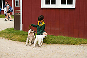A boy feeds goat kids at The Farm, Door County, Wisconsin, USA
