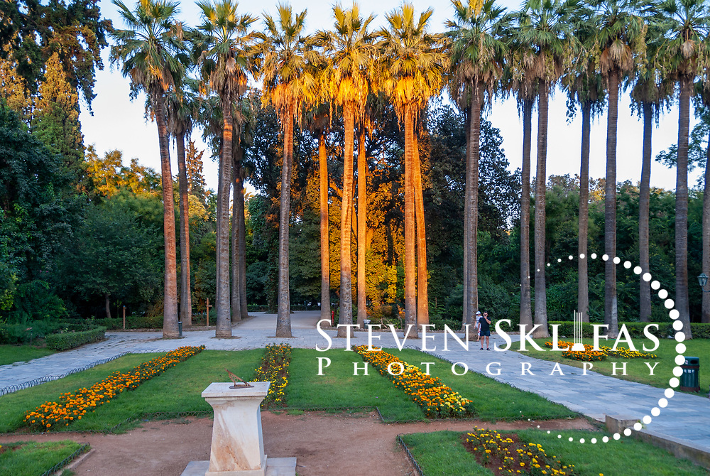 Athens. Greece. View of the low sun glow on a majestic row of fine Palm trees at the National Gardens, a vast green refuge and oasis in the centre of Athens. The National Gardens was formerly the Royal