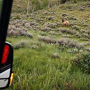 A bull elk through the van door on a Teten Science Schools wildlife tour.