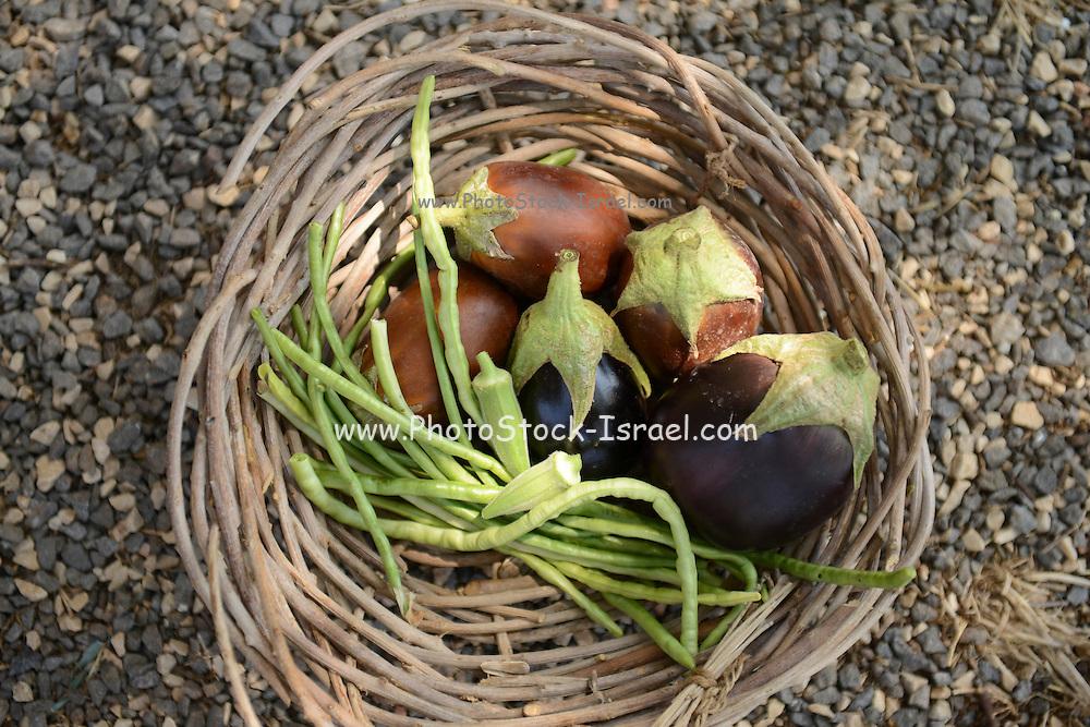 Organic aubergines
