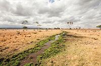 Wild Africa - Meru National Park