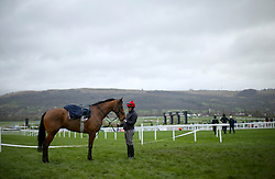 Racehorse Due Reward ahead of the days racing at St Patrick's Thursday of the 2019 Cheltenham Festival at Cheltenham Racecourse.