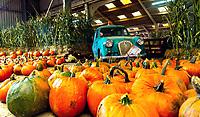 Pumpkins R Us opens at  Stoneleigh Park, Kenilworth  photo by Mark Anton Smith