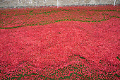 2014_10_15_poppies_SSI