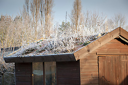 Green roof on a shed on a frosty day in winter