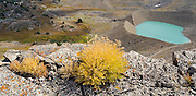 Detail of alpine vegetation and a turquoise blue glacial lake forming against the terminal moraine of a receding glacier at Hurricane Pass, along the Teton Crest trail, in Grand Teton National Park, Wyoming.