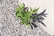 grass growing between the cement pavement and gravel