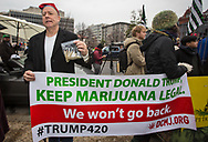 Jan, 20, 2017 in Washington D.C at Dupont Circle during a protest the morning of Donald Trump's<br />  inauguration. the group, DCMJ that organized the protest is  against Donald Trump's pick of  Jeff Session as Attorney General due to his anti Marijuana stance. <br /> At four minutes and twenty seconds into Trump's Inauguration, protesters plan to light up the joints.