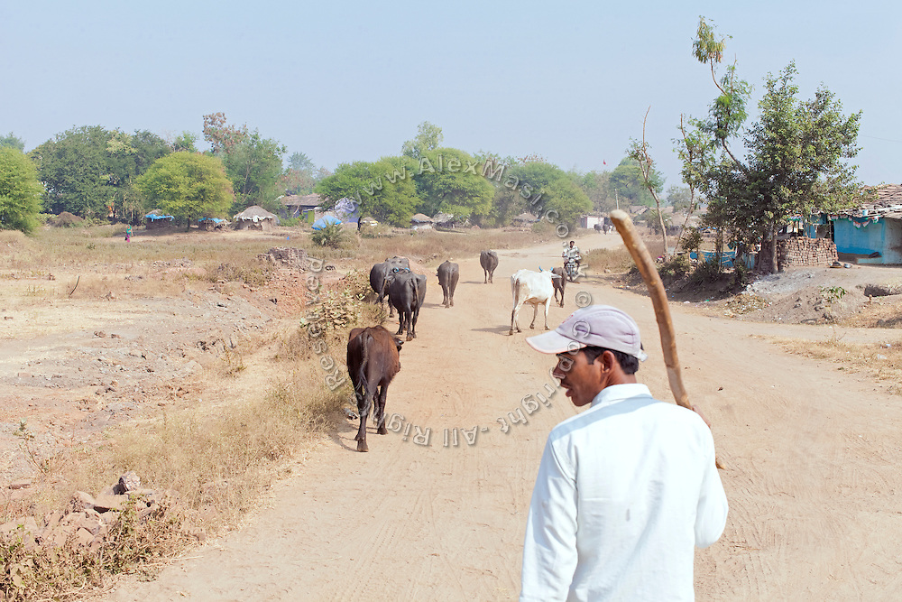 A herder is walking with his animals on a rural road in front of the Jamoniya Tank Girls Hostel, where the Unicef India Sport For Development Project has started in 2012. Covering 313 state-run girls' hostels and 207 mixed hostels in Madhya Pradesh, the project ensures that children from Scheduled Tribes (ST) and others amongst the poorest people in India, can easily access education and be introduced to sports. Field workers from Unicef also oversee their nutrition and monitor the overall conditions of each pupil.