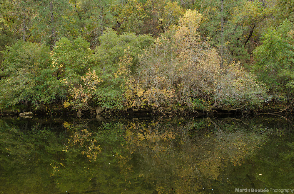 Reflections of fall colors in the South Fork American River, near Lotus, California
