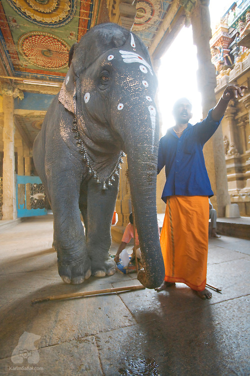 An elephant and his master stand under the arcade of the Shri Minakshi hindu temple in Madurai, Tamil Nadu, India, on December 27, 2007. Upon entering the sacred site, hindu devotees make coin offerings to the elephant in return for a gentle trunk tap on the head, in lieu of blessing. Elephants are revered in India as they are associated with Ganesh, the son of Lord Shiva. Ganesh is often invoked at the beginning of any undertaking, as he is the 'remover of obstacles'.