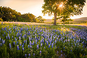 Spring in the Hill Country, searching for Texas bluebonnets.