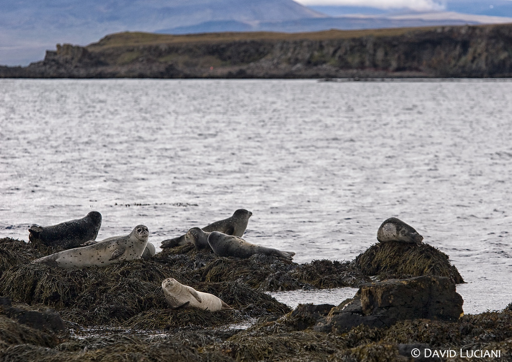 Hindisvík is a touristically interesting region for seal watching, as it is known to be one of the best spots in Iceland.