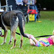 Elaina Horne, 2, of Beaufort, clutches on to the leash of her pet dog named Grizzly Bear while laying on the grass of USCB during the Beaufort Homegrown Music Fest on June 7, 2014.