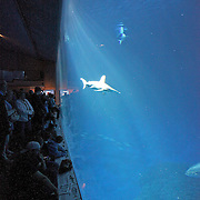"""Visitors tour the """"Open Seas Exhibit"""" at the Monterey Bay Aquarium, which is located on Cannery Row in Monterey, California, on Friday July 13, 2012.(AP Photo/Alex Menendez)"""