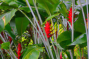 Hawaii Tropical Botanical Garden, Hilo, Hamakua Coast, Big Island of Hawaii