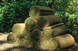 Rolls of turf left in a shady corner in preparation for lawn laying