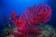Underwater Méditerranée-France