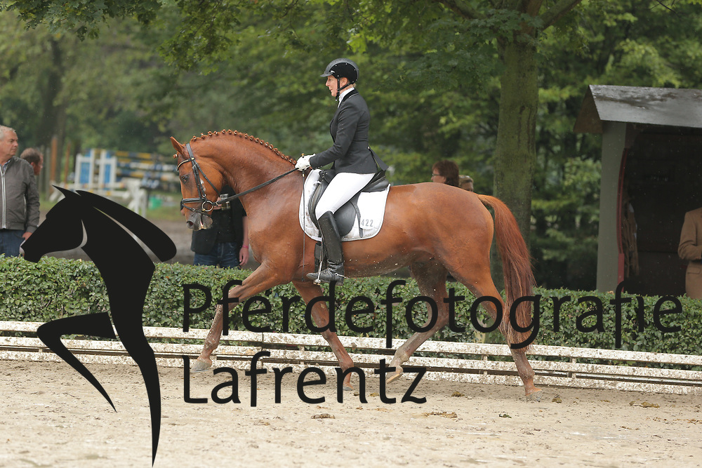 Kuntz, Hella, Tudor<br /> Hannover - Trakehner Bundesturnier<br /> Reitpferde, 3j. Hengste<br /> © www.sportfotos-lafrentz.de/ Stefan Lafrentz
