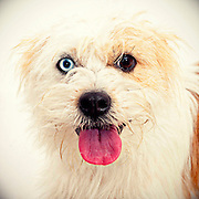 Scruffy terrier finds new home.