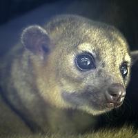Central America, Latin America, Costa Rica, Golfo Dulce, Cana Blanca Wildlife Sanctuary.