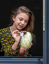 © Licensed to London News Pictures. 11/04/2020. London, UK. Olivia 9 from Epsom in Surrey enjoys her Easter eggs while under lockdown as millions of children get used to staying in doors for long periods of time over the Easter holidays while the coronavirus pandemic continues. Photo credit: Alex Lentati/LNP