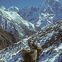 NEPAL, HIMALAYA,  Dzos (yak/cattle crossbreeds) carry trekking loads up Gokyo Valley in Khumbu region. 22,250 ' (6,782m)  Kangtega bkg.