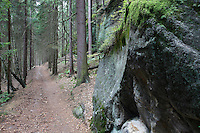 TREK IN THE FOREST. PICEA ABIES. NORWAY SPURCE.<br /> BRTNICKY HRADEK. CESKE SVYCARSKO. CZECH REPUBLIC.