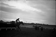 """16/01/1963<br /> 01/16/1963<br /> 16 January 1963<br /> Leopardstown Races at Leopardstown Race track, Dublin. Mrs J.J. Burns' """"Out and About"""" (ridden by C. Kinnane) clearing the last jump in front of the field to win the Glencullen Handicap Chase at Leopardstown."""