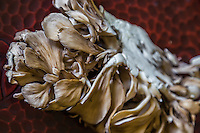 Maitake Mushrooms - A mushroom is the fleshy, body of a fungus, typically produced above ground. The term is used to describe the fleshy fruiting bodies of some Ascomycota.