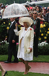 © Licensed to London News Pictures. 06/11/2012. Camilla, Duchess of Cornwall holds up an Umbrella as it starts to rain during the Emirates Melbourne Cup at the Flemington Racecourse, Melbourne. Photo credit : Asanka Brendon Ratnayake/LNP
