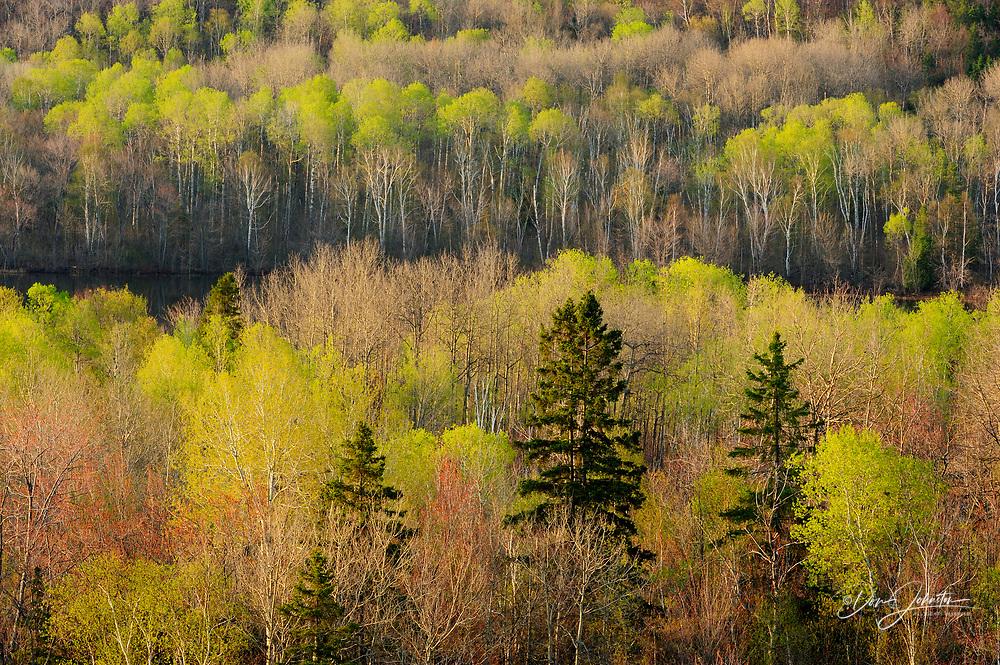 Spring foliage around Simon Lake (from Blueberry Hill), Greater Sudbury, Ontario, Canada
