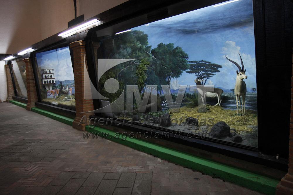CALIMAYA, México.- Se están realizando los últimos detalles para la inauguración del museo del zoológico de Zacango que será abierto al público el próximo 10 de Diciembre, como parte de la celebración del 30 aniversario del lugar. Agencia MVT / Crisanta Espinosa. (DIGITAL)