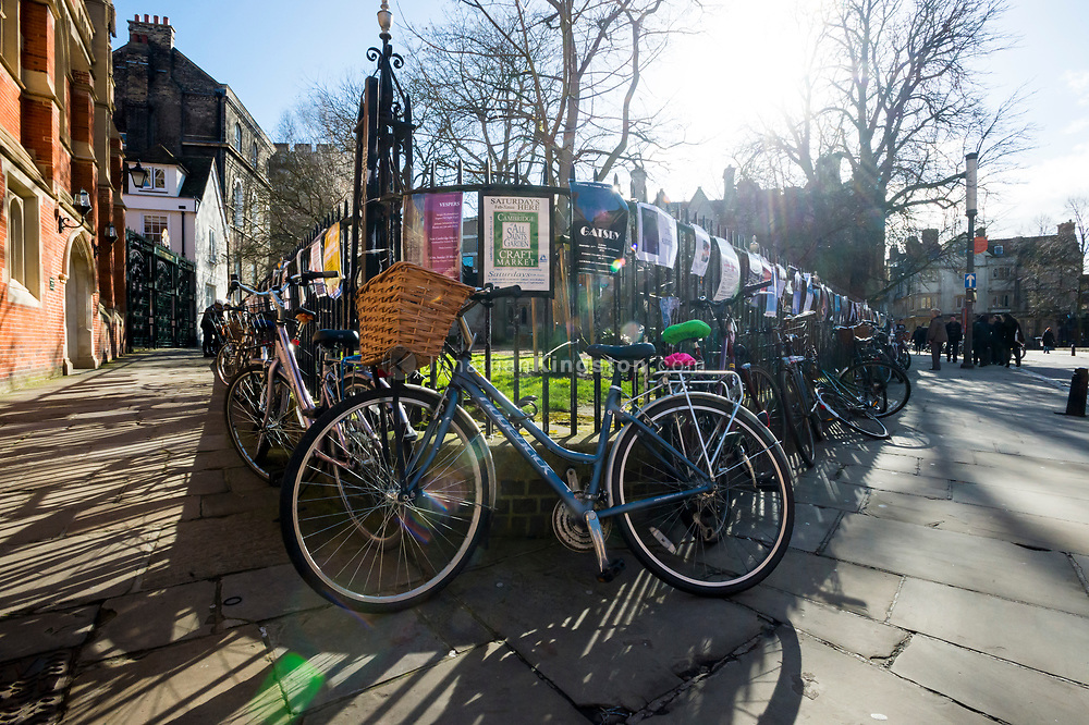 Large group of bikes locked to an iron fence in the Cambridge, England.