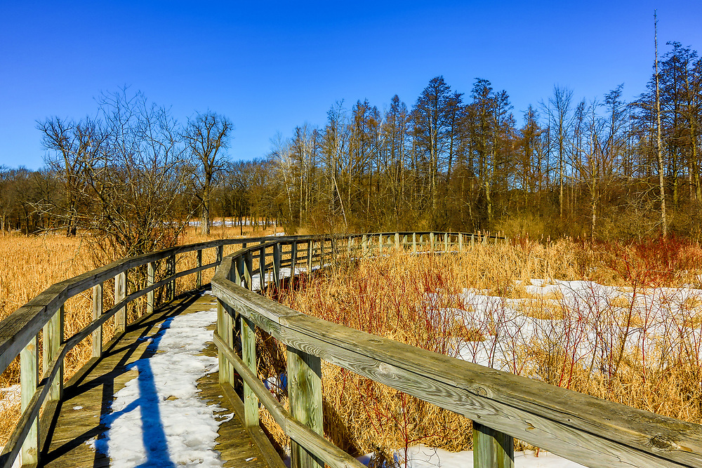 Teal Pond boardwalk over snow covered wetlands on east end of Curtis Prairie in UW-Madison Arboretum. Photo taken February 28, 2020.