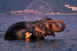 An elephant and its handler, or Mahout, enjoy a relaxing swim after a hard day of entertaining tourists.  Elephant trekking, usually consisting of a couple hours traversing jungle trails on elephant back, has become a very popular tourist activity in Thailand's resort areas.  Phuket, Thailand.