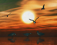 Seagulls playing at sunset on the beach. What could be more atmospheric and bring the sea into your home than this coastal scene. This painting easily brings the atmosphere of the sea to your home. This coastal scene can be printed in different sizes and on different materials. Both on canvas, wood, metal or framed so it certainly fits into your interior. –<br /> -<br /> BUY THIS PRINT AT<br /> <br /> FINE ART AMERICA / PIXELS<br /> ENGLISH<br /> https://janke.pixels.com/featured/gulls-at-sunset-2-jan-keteleer.html<br /> <br /> <br /> WADM / OH MY PRINTS<br /> DUTCH / FRENCH / GERMAN<br /> https://www.werkaandemuur.nl/nl/shopwerk/Meeuwen-bij-zonsondergang-2/778108/132?mediumId=15&size=70x55<br /> -