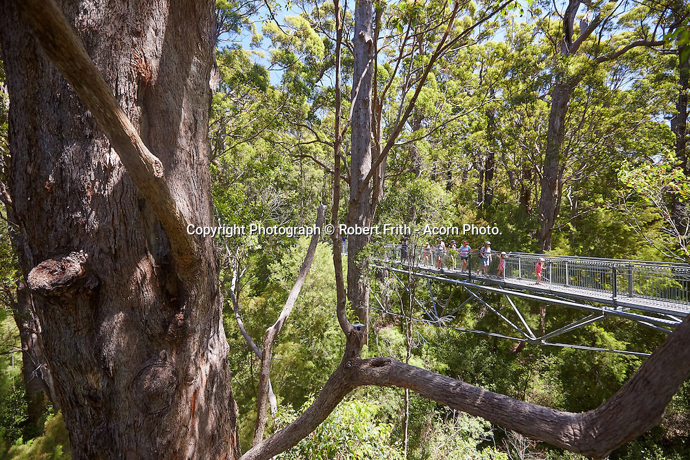 Tree Top Walk in the Valley of the Giants Tingle forest near Walpole. The Tree Top Walk is a 600m long canopy walk structure designed by Donaldson and Warn Architects.