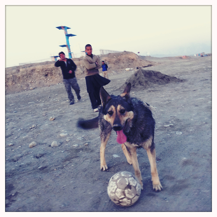 A German shepherd plays soccer with children.