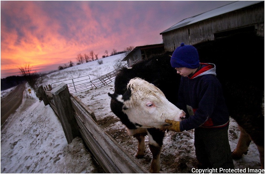 """As the sun rises early Friday morning, John Frost, 10,  and 1-year-old steer, Jerimiah, spend some quality time together at R Frost Dairy Farm in Paris.  """"I like being with the cows, to see how they think, they move, and what they do,"""" said Frost of his time growing up on a dairy farm.  The youngest of his siblings, John owns 4 cows, that he proudly shows in 4H competitions..."""