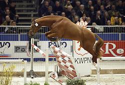 61 Torino<br />KWPN hengstenkeuring 2003<br />Photo © Dirk Caremans