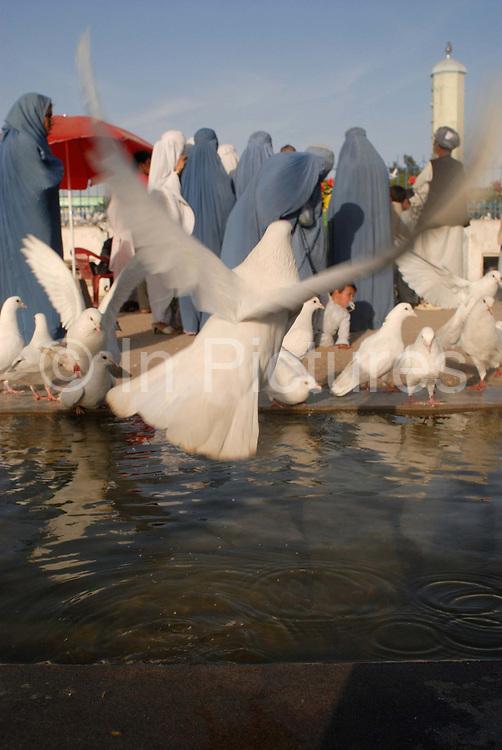 Mazar-i-Sharif, shrine of Hazrat Ali, cousin and son-in-law of the prophet Mohammed. Women feed the white doves.