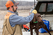John Zeman gets ready to hunt pheasants by placing a GPS tracking collar on his German Shorthair Willy.