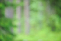 Taiga Pine forest, Pinus Sylvestris.Suomussalmi, Finland